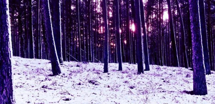 Slownoise – Silent Wilderness