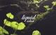 Ackost – Liquid LP