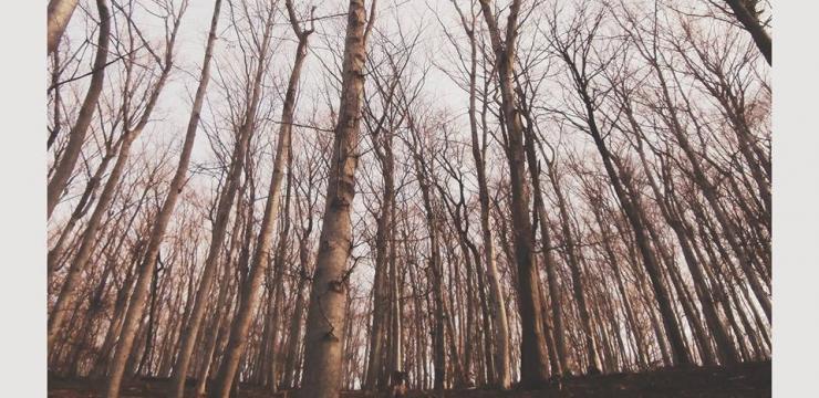 therapy: session #4 – SATIV by Kashatskikh