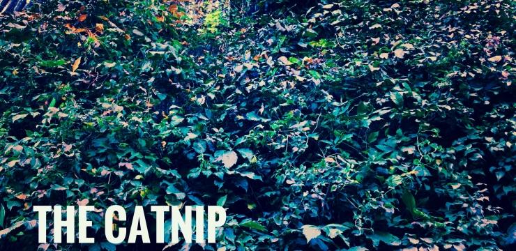 leloopar – The Catnip Investigation ep.