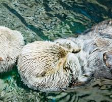 """Twerk's first album in 10 years – """"Otter"""""""