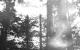 [Ambient Mix] Katsuyuki Taguchi – Rainy Days In The Forest